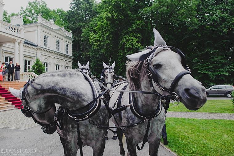 piękne konie ślub