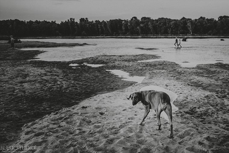sesja z psem na plaży